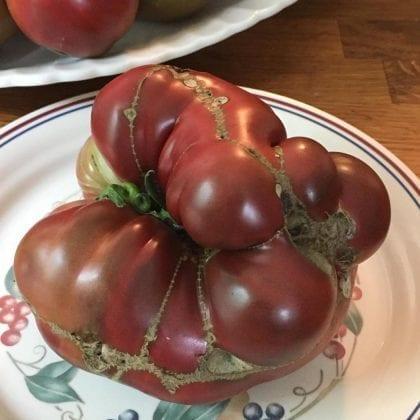 farm-tomatoes_image