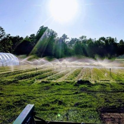 farm_green-field_image