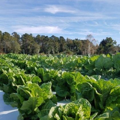 farm_outdoor_1_image
