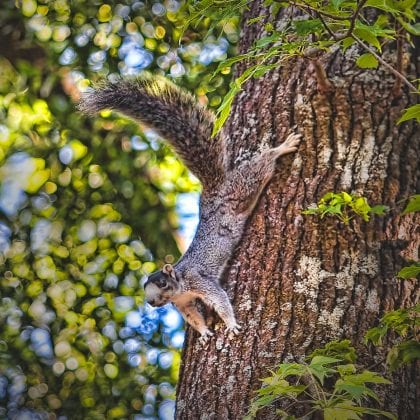 tom-peterson-squirrel-on-tree-2_image