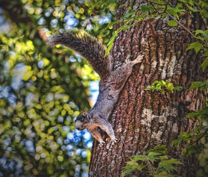 squirrel_image